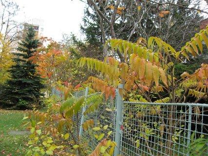 FOTKA - Podzim na sídlišti 31