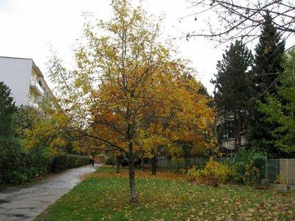 FOTKA - Podzim na s�dli�ti 32