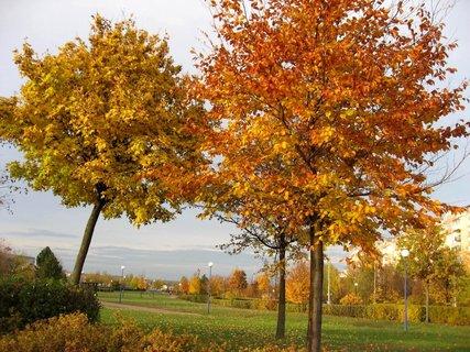 FOTKA - Podzim na s�dli�ti 35