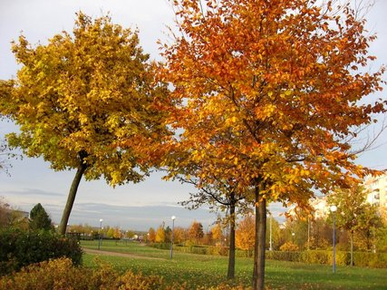 FOTKA - Podzim na sídlišti 35