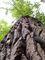 strom - kůra