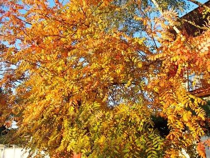 FOTKA - zlatistá jeseň