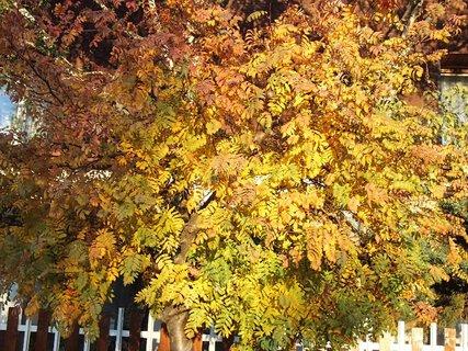 FOTKA - zlatistá jeseň.