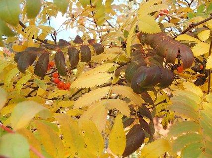 FOTKA - 2012 farby jesene149