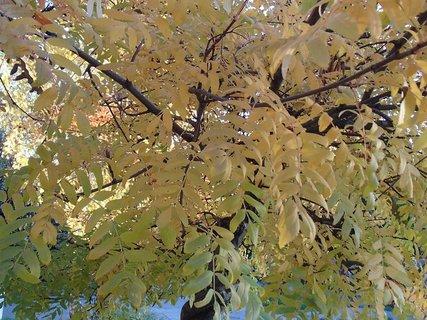 FOTKA - 2012 farby jesene150