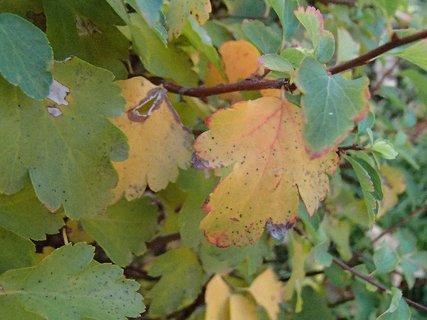 FOTKA - 2012 farby jesene151