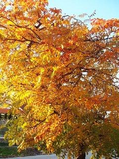 FOTKA - zlatistá jeseň..