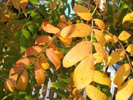 FOTKA - 2012 farby jesene152