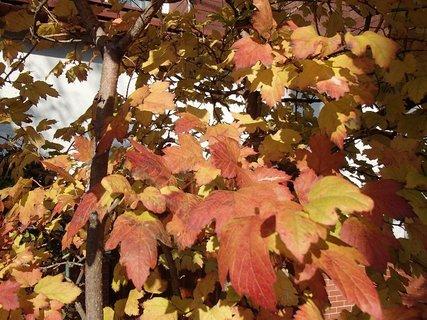 FOTKA - 2012 farby jesene155