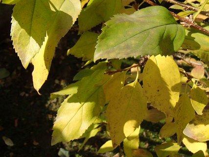 FOTKA - 2012 farby jesene156