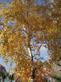 FOTKA - jeseň v oblakoch...