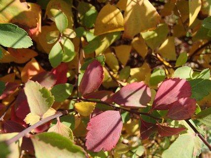 FOTKA - jeseň farbí...