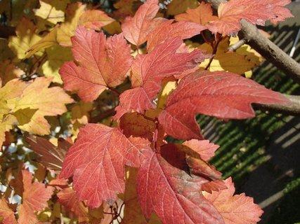 FOTKA - jeseň farbí....