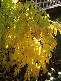 FOTKA - jeseň farbí.....
