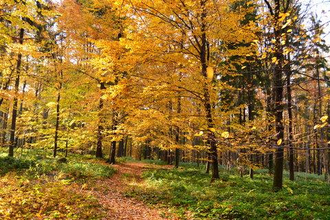 FOTKA - Chvála podzimu