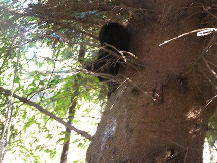 FOTKA - na strom�.. ,.