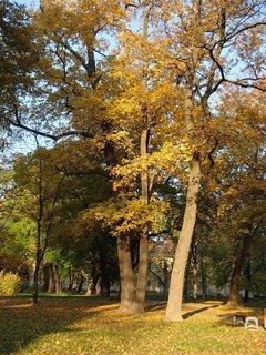 FOTKA - jesenný park