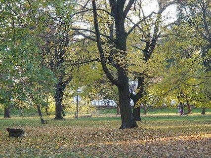 FOTKA - jesenný park.