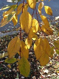 FOTKA - 2012 farby jesene157