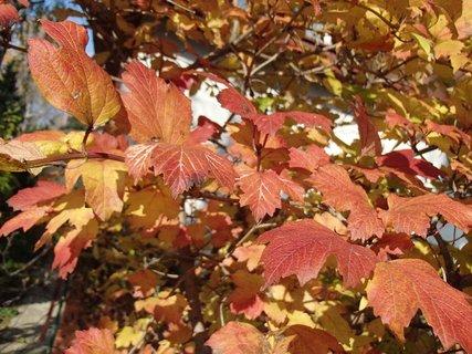 FOTKA - 2012 farby jesene158
