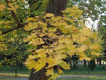 FOTKA - 2012 farby jesene159