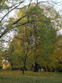 FOTKA - jesenný park..