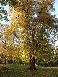 FOTKA - stromy v parku.....
