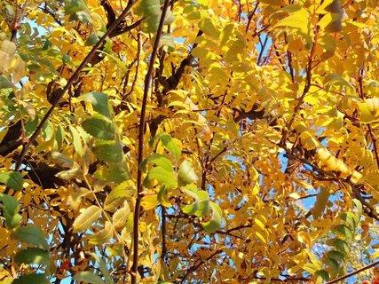 FOTKA - zlatistá jeseň...