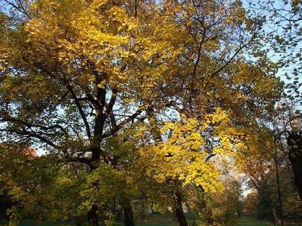 FOTKA - zlatistá jeseň....