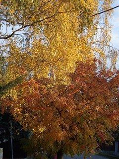 FOTKA - zlatistá jeseň.....