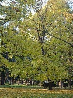 FOTKA - stromy v parku......