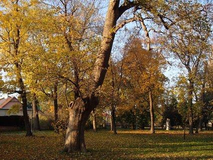 FOTKA - zlatistá jeseň......