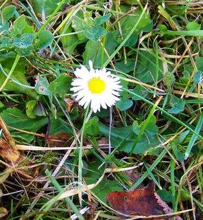 FOTKA - 10.11.2012, dopolední podzimní procházka