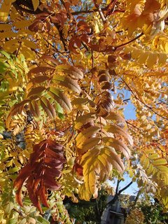 FOTKA - zlatistá jeseň.......