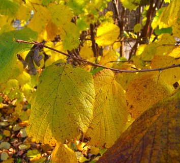 FOTKA - 10.11.2012, dopolední podzimní procházka, listy ..