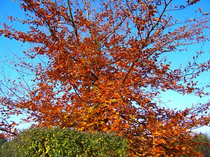 FOTKA - 10.11.2012, dopolední podzimní procházka, strom ve slunci..