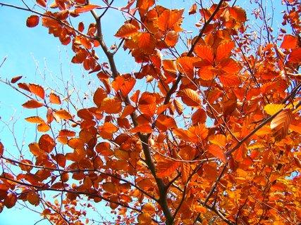 """FOTKA - 10.11.2012, dopolední podzimní procházka - """"zlaté listy"""""""