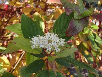 FOTKA - jesenný kvietok