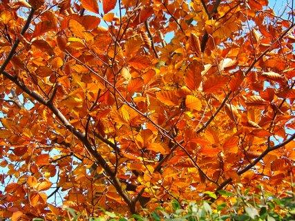 FOTKA - 10.11.2012, listy ve slunci...