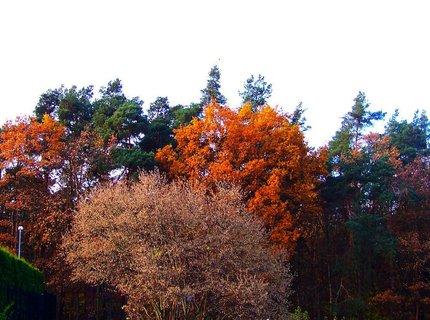 FOTKA - 10.11.2012, pohled na Kuntratický les (právě tam probíhala dnes příprava na zítřejší Velkou Kunratickou)
