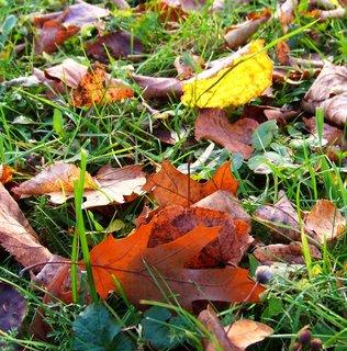 FOTKA - 10.11.2012, listí na zemi proti slunci..
