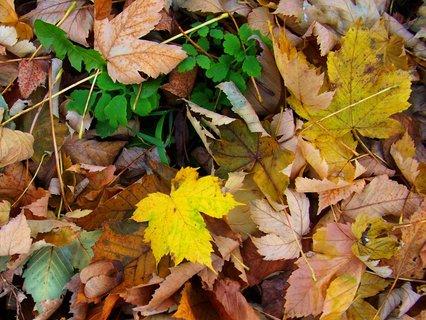 FOTKA - 10.11.2012, listí už hnědne..