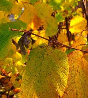 FOTKA - Včerejší podzimní procházka Kunraticemi - větvička