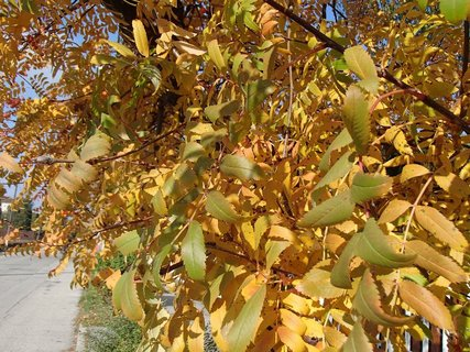 FOTKA - zlatistá jeseň.........