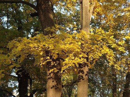 FOTKA - zlatistá jeseň..........