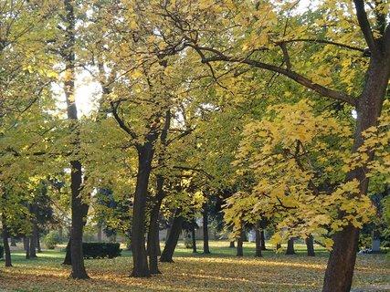 FOTKA - jeseň v parku..