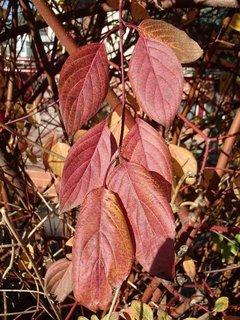 FOTKA - 2012 farby jesene162