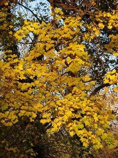 FOTKA - zlatistá jeseň...........