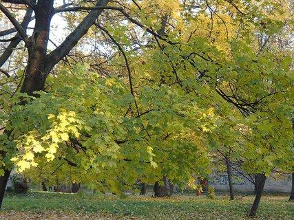 FOTKA - stromy v parku.........
