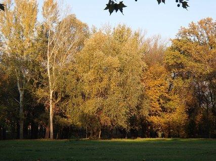 FOTKA - zlatistá jeseň............